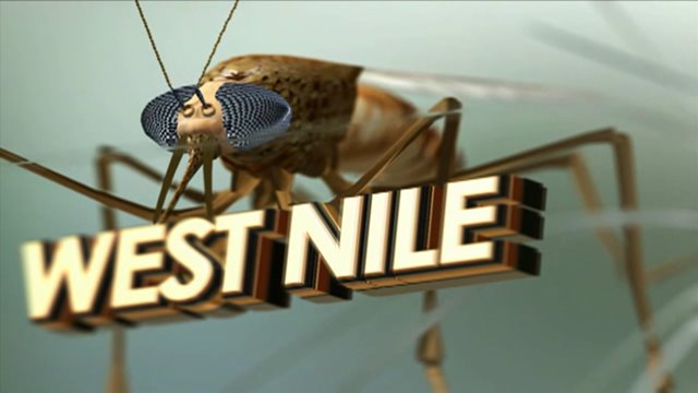2 mosquitoes test positive for West Nile Virus in Houston region