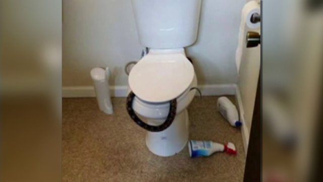 Alabama man finds snake in toilet