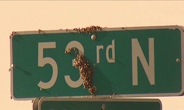Bee Crate Spills on Kansas Highway