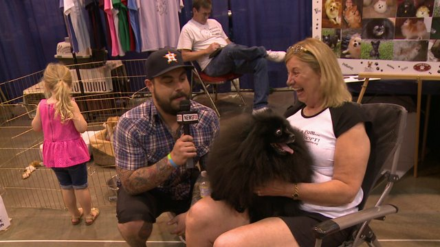 Making friends at a dog show