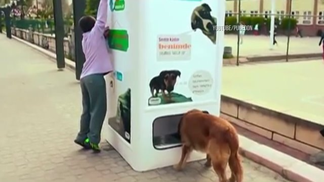 Vending machine takes bottles and gives food to stray dogs